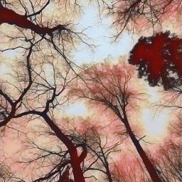 freetoedit interesting photography nature art