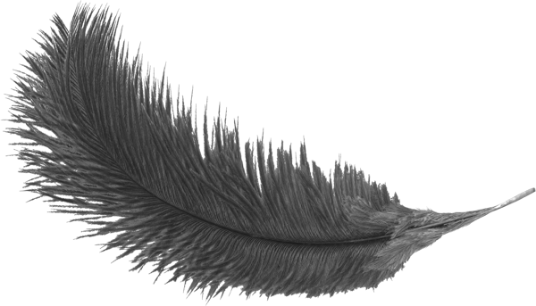 #feather#sticker