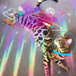 freetoedit cat rainbow galaxy ecspaceconqueror spaceconqueror покорикосмос космос space