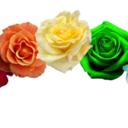 freetoedit rose flowercrown rainbow crown