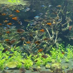 myphoto myclick pisces aquarium