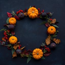 pumpkin thanksgiving background backgrounds freetoedit