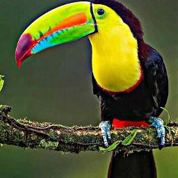 freetoedit remixit petsandanimals bird toucan