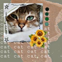 freetoedit cat cute retro collage irccatglance catglance