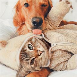 freetoedit cat dog irccatglance catglance
