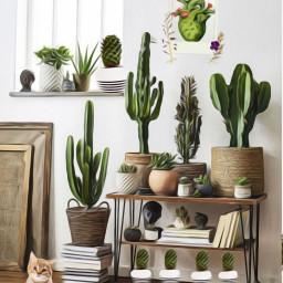 cacti cactus magiceffect art freetoedit