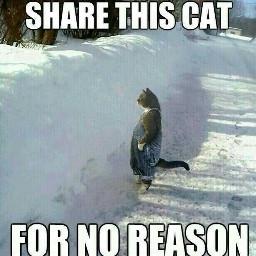 freetoedit shareit sharethis cat memes