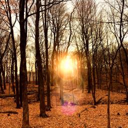 deerhunting rut woods minnesota fall