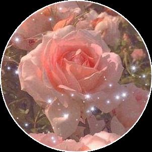 #rose #flower #cutout