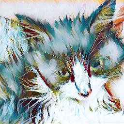 cat kitten kittylove kittylover freetoedit