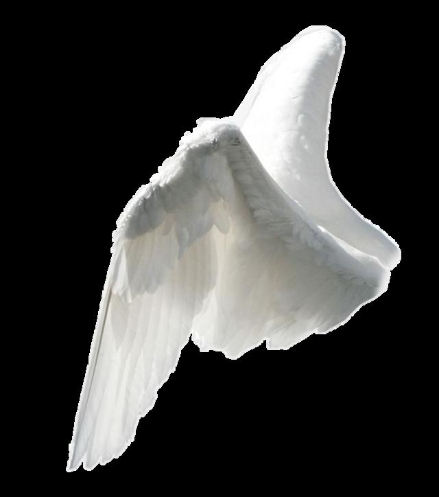 #steampunkangel #angelwings