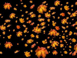 sticker leaf autumn autumnleaf aesthetic freetoedit. freetoedit