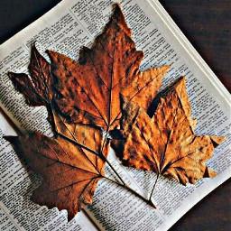 freetoedit leaves book bible love