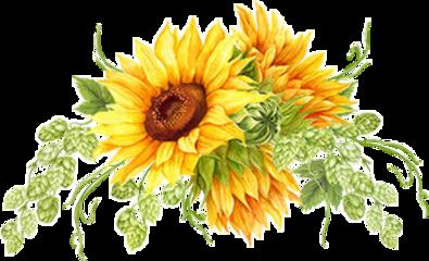 sunflowers floralarrangement fall autumn thanksgiving freetoedit