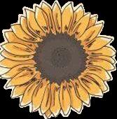 sunflower stickers fall yellowaesthetic yellow freetoedit