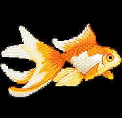 koifish fish pixel aesthetic orange freetoedit