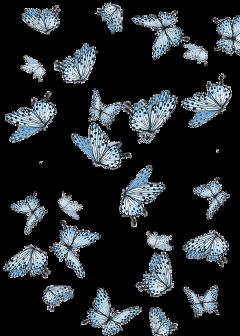 tumblr picsart borboleta butterfly stickers freetoedit