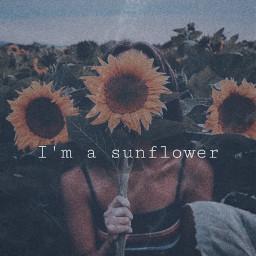 freetoedit sunflower summer famous aesthetic