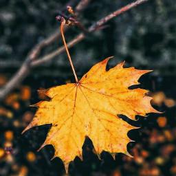freetoedit fall otoño anaranjado orange