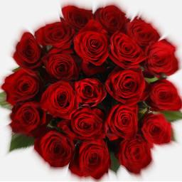 une rose pour le plus freetoedit