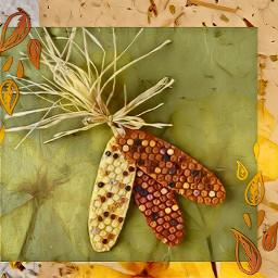 freetoedit corn fcthanksgiving thanksgiving