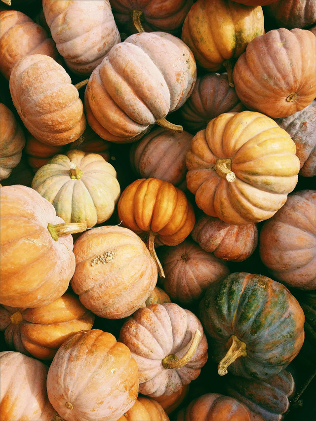 Add your own touch.	 Unsplash (Public Domain) #pumpkin #thanksgiving #pumpkins #background #backgrounds #freetoedit