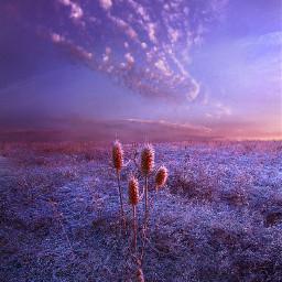 landscapephotography nature freetoedit remixit purple
