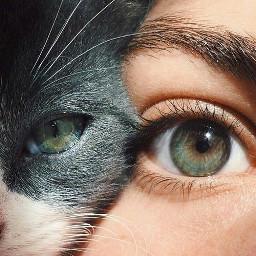 freetoedit ojos eyes tumblr remixit