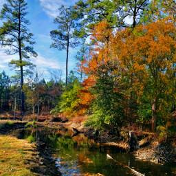 freetoedit naturephotography trees autumn