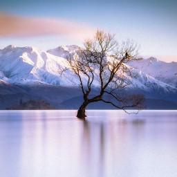 cold winter tree sky nature