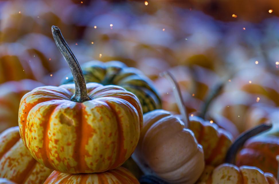 Discover your inner artist! Unsplash (Public Domain) #pumpkin #thanksgiving #background #backgrounds #freetoedit