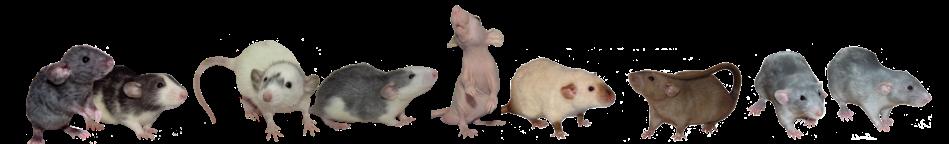 aesthetic rat cute pretty soft freetoedit