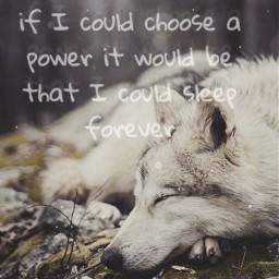 wolf sleeping freetoedit