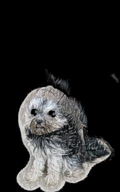 stickers grey naturephotography petsandanimals doggy freetoedit scgray