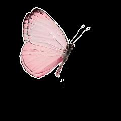 bugs wings vintage butterfly pink freetoedit