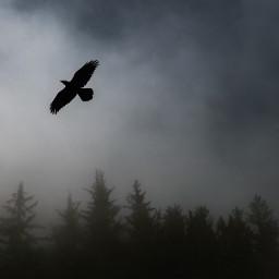 bird fog nature background backgrounds freetoedit