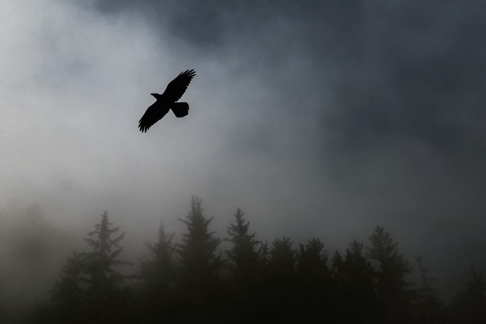 Bring your creativity to this image!	 Pexels (Public Domain) #bird #fog #nature #background #backgrounds #freetoedit