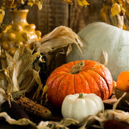 pumpkin thanksgiving background backgrounds freetoedit