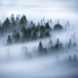 misty nature trees background backgrounds freetoedit