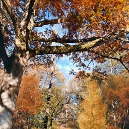 freetoedit autumn trees naturephotography woods