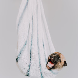 puppy dog pet animal cute freetoedit