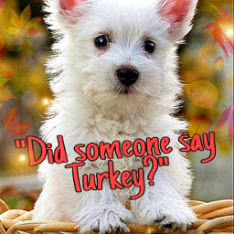 myedit westhighlandterrier topten fcthanksgiving thanksgiving