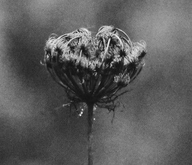 #freetoedit #photography #blackandwhite #flower #november #mood
