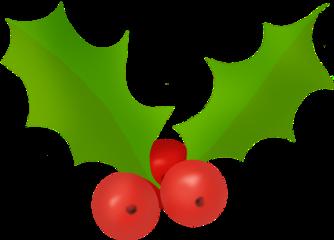 holly hollyberries redandgreen leaves december freetoedit