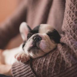 cute puppy dog pet animal freetoedit