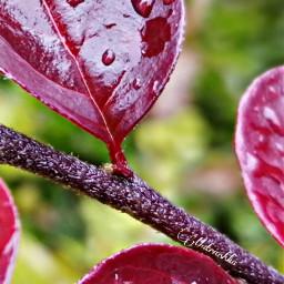 freetoedit leaf myclick