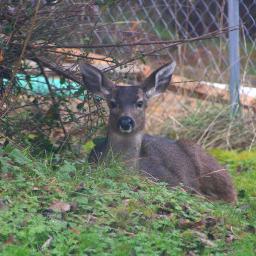 mypic deer chillaxing freetoedit