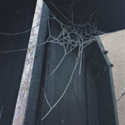 cold winter spider spidernet ice
