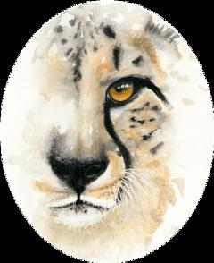 freetoedit sccheetah cheetah