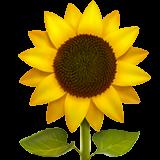 emoji iphone apple sunflower flower freetoedit